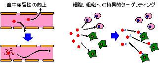 DDS 化による分子プローブの生体内動態制御イメージ