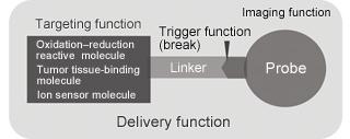 Schematic diagram of molecular probe