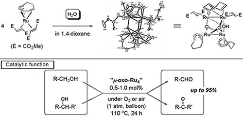 Synthesis and catalytic function of oxo-crosslinked four-Ru-nuclei complex