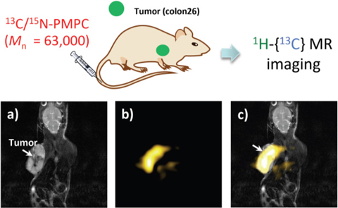 In vivo MRI image of mouse administered 13C/15N-PMPC probe